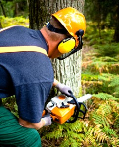Man Operating Chainsaw with Hearing Protection